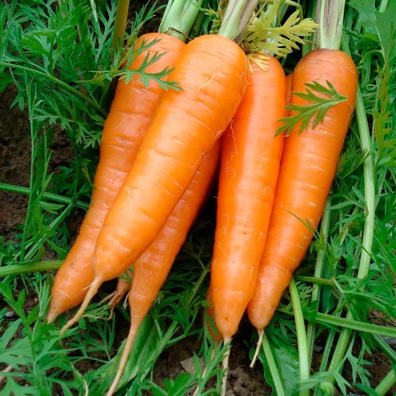 Comprar Zanahoria de Manojo online