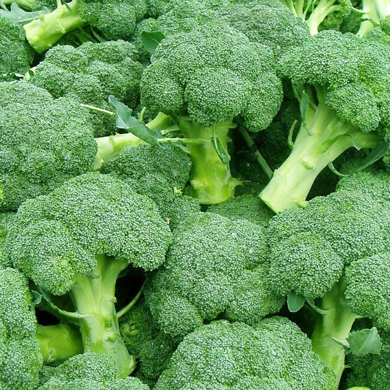 Comprar Brócoli online