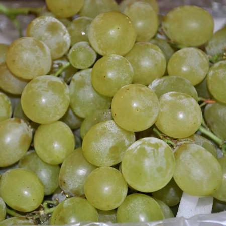 Comprar Uva blanca Victoria online