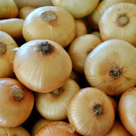 Comprar Cebolla Gallega online