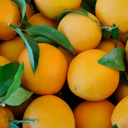 Comprar Naranja de Hoja (Ecológica) online
